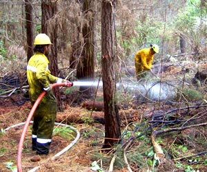 Action Forest Management fire crew dampening a fire